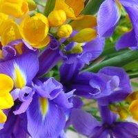 Anyácskám virága