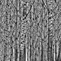 Fától az erdőt