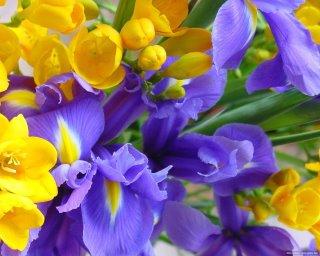 kék és sárga virágok.jpg