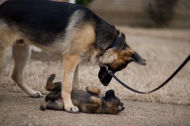 két kutya.jpg