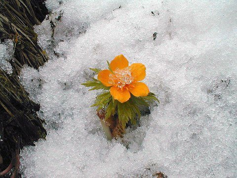 téltemető.jpg