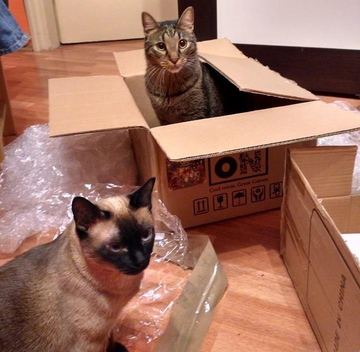 3. macska csatlakozik
