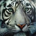 Tigris balzsam izomfájdalomra, fejfájásra, megfázásra