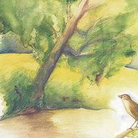 Madarak és fák napja Pesterzsébeten