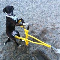 Ön hova helyezné át a vasútállomás melletti kutyafuttatót?