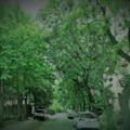 Requiem egy zöld Gubacsért