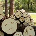 Pesterzsébet megvédi a fáit!
