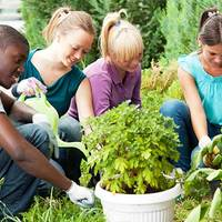 Szeretsz kertészkedni? Pályázz és nyerj!