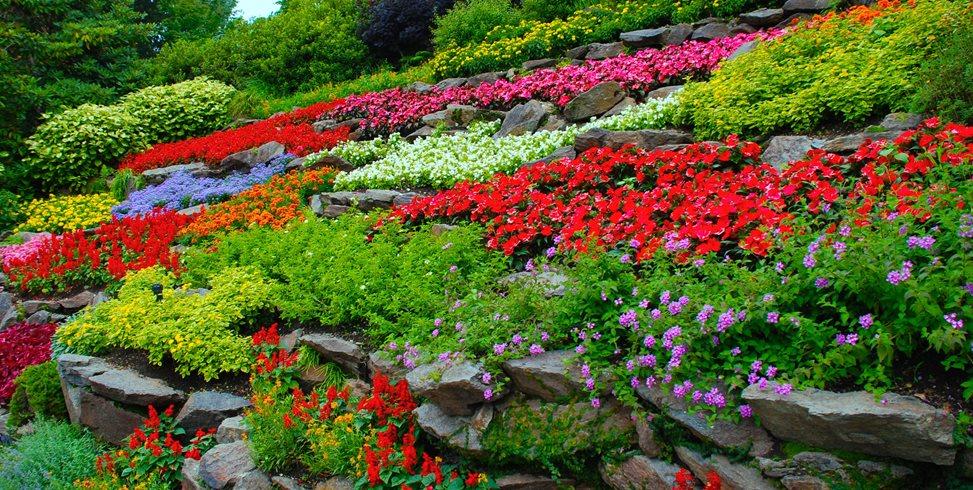 colorful-flowers-terraced-hillside-garden-design_11850.jpg
