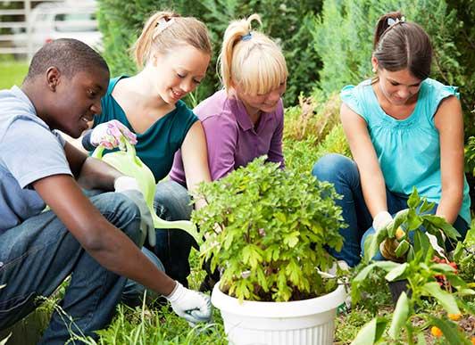 millenials-planting_1.jpg