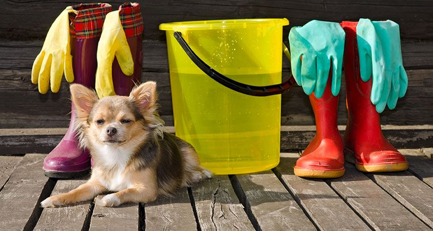 spring-cleaning-tips-for-dog-owners.jpg