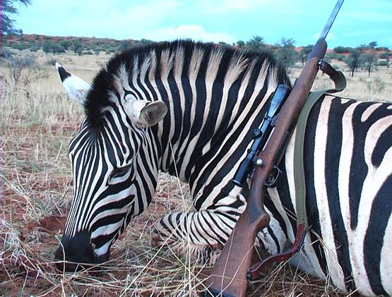 zebracsodor.jpg