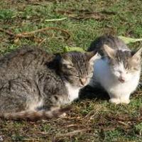 Macska és a szülés