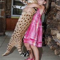 A legmagasabb macska