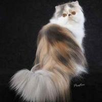 A macskafajták