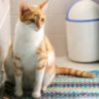 Honnan tudjuk hogy a macska terhes?