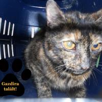 Gazdájuk halála miatt hajléktalanná vált cicák gazdira találtak!
