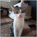 Rubin még mindig gazdit keres!