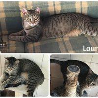 Laura még mindig gazdit keres!