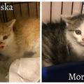 Borzoska és Morcoska gazdit keres!