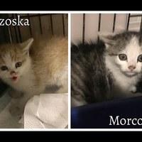 Borzoska és Morcoska elhunyt!