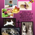 Ne ajándékozz élő állatot! Húsvétra sem!
