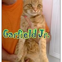 Garfield Jr. még mindig gazdit keres!