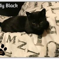Lady Black gazdira talált!