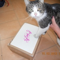 Frici cica pakkot kapott!