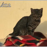 Léna még mindig gazdit keres!