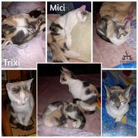 Trixi és Mici még mindig gazdit keres!