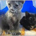 Timi és Teri gazdit keres!