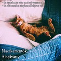 Macskamentők Alapítvány Macskapanziója