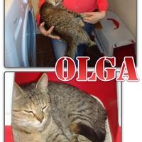 Olga jelentkezik