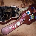 Aki szereti a zenét, rossz macska nem lehet