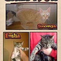 Szonja, Mirtill és Emília gazdira talált!