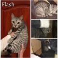 Flash még mindig gazdit keres!