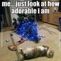Nálatok áll még a karácsonyfa?