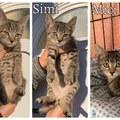 Pici, Simi és Mici még mindig gazdit keres!