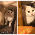 Miskolci Panni még mindig gazdit keres!