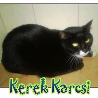 Kerek Karcsi még mindig gazdit keres!