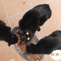 Ne légy babonás, fogadj be fekete macskát!!