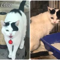 Picike még mindig gazdit keres!