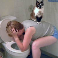Egy cica ott segít, ahol tud.