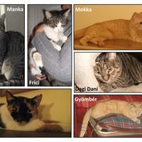 Gazdikereső cicák - összesítő