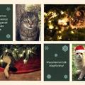 Kellemes Karácsonyi Ünnepeket kíván a Macskamentők Alapítvány!