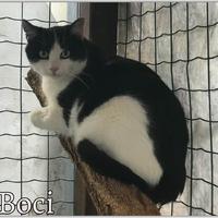 Boci még mindig gazdit keres!