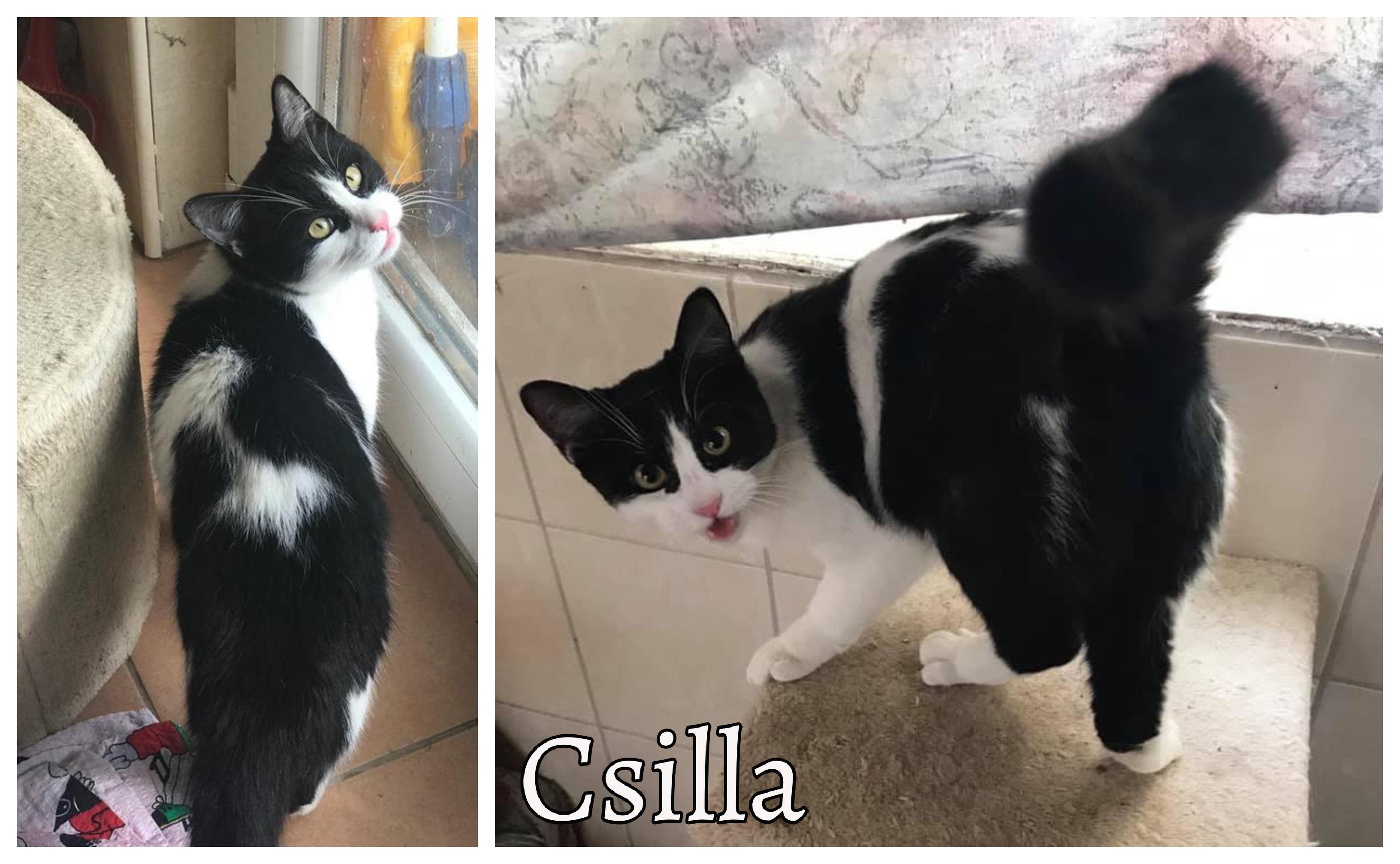 csilla0317_bf_2.jpg