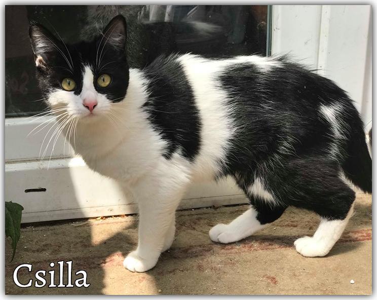 csilla0530_bf_1.jpg