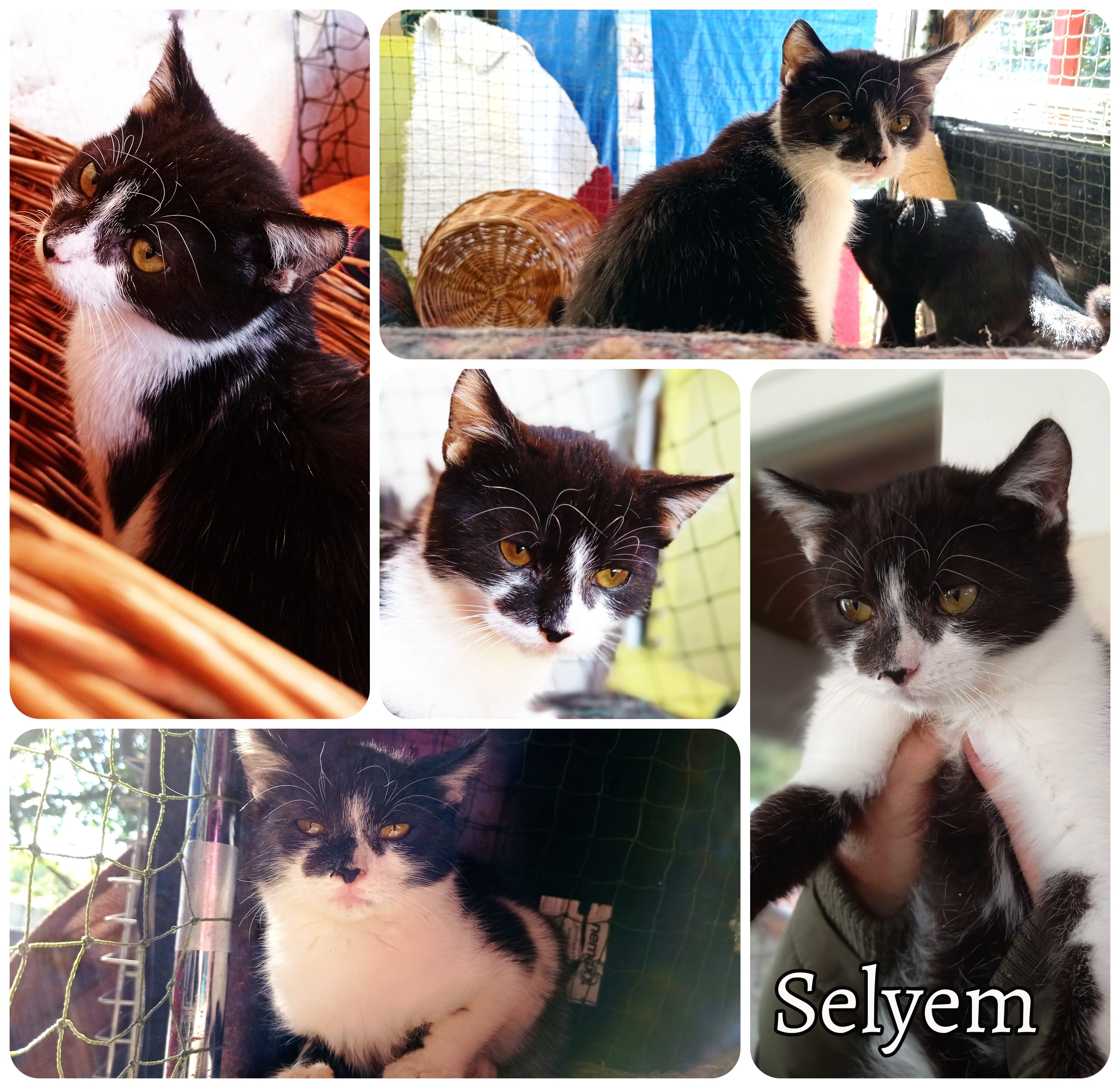 selyem1010_bf.jpg